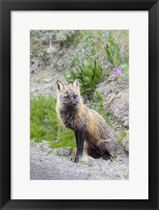 Framed Gray Fox Waiting Print