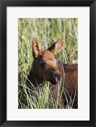 Framed Long Grass Brown Fur Print