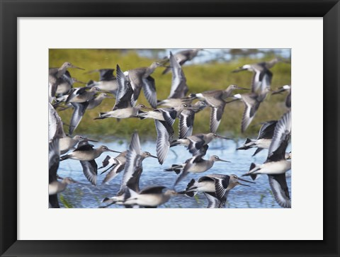 Framed Flock By The Sea Print