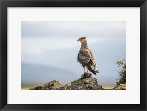 Framed Feathered Friend Colorful Beak Print