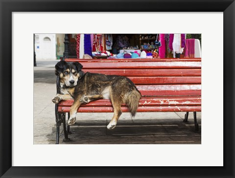 Framed Red Bench Dog Nap Print