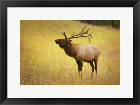 Framed Antlers In The Field Print