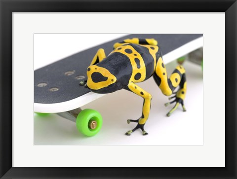 Framed Yellow-banded Frog On Skateboard Print