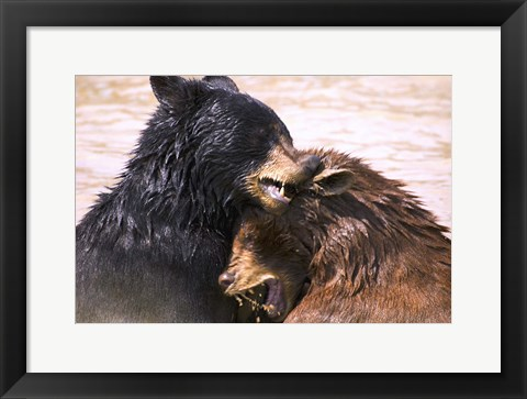 Framed Wet Bear Hug Print