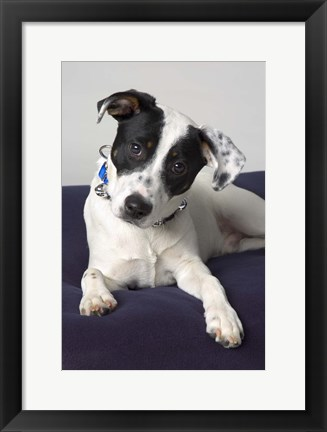 Framed Black And White Puppy On Purple Print