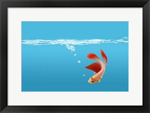 Framed Goldfish Gone Swimming I Print