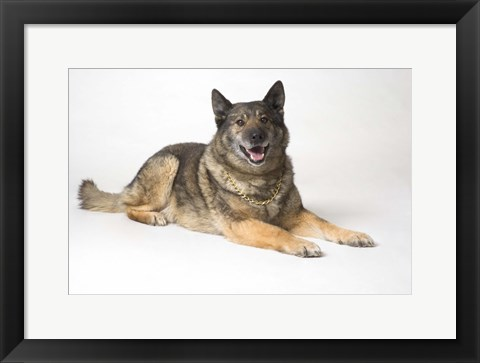 Framed Dog Portrait In Gold Chain Print