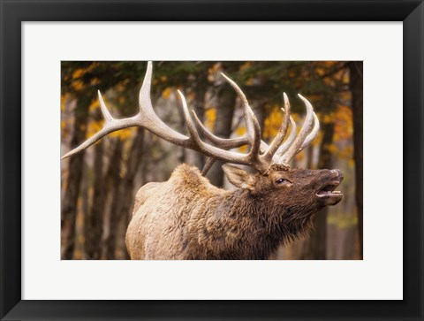 Framed Antlers In the Woods Print