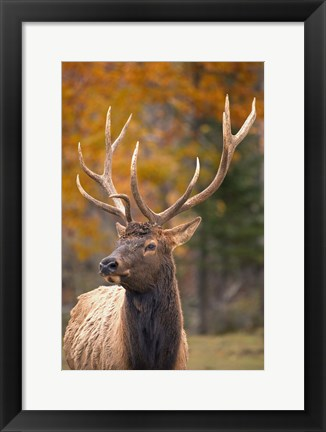 Framed Fall Deer Antlers Print