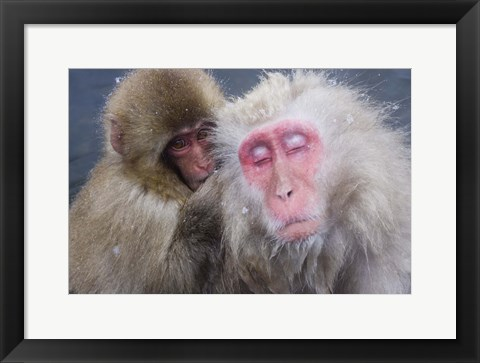 Framed Monkey And Infant Portrait Print