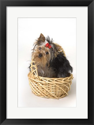 Framed Dog Portrait Basket And Red Bow Print