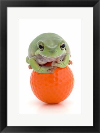 Framed Green Frog Orange Golf Ball II Print