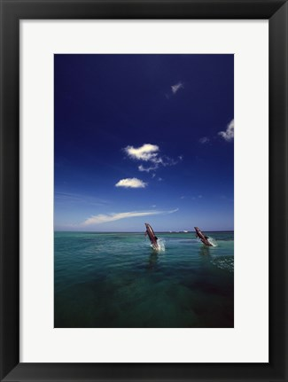 Framed Dolphin Blue Water Swim Duo Print