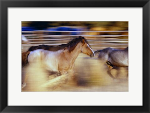 Framed Horses In Motion Print