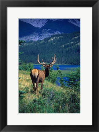 Framed Caribou And Mountains Print
