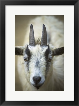 Framed Two Horns Closeup Print