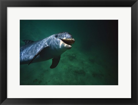 Framed Dolphin Green Water Swim Print