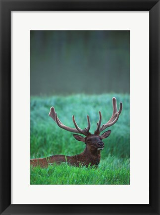 Framed Antlers In The Green Field Print