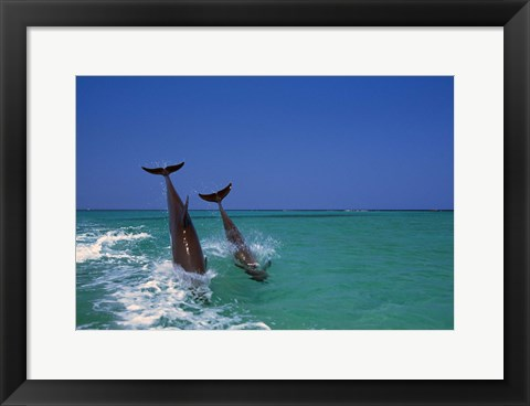 Framed Dolphin Blue Water Dive Print