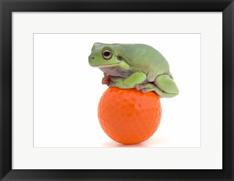 Framed Green Frog Orange Golf Ball I Print