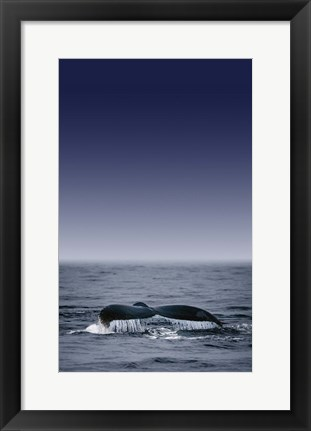 Framed Dolphin Tail Blue Sea Print