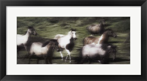Framed Brown And White Horses Rushing Print