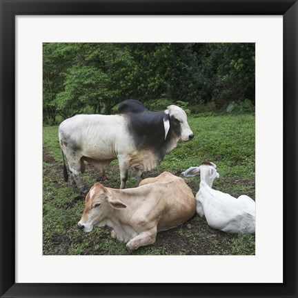 Framed Resting Animals Print