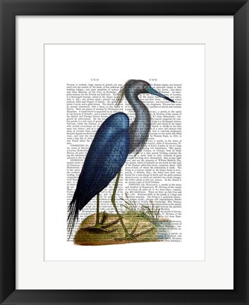 Framed Blue Heron 2 Print