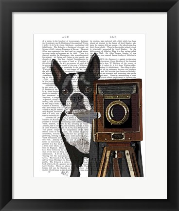 Framed Boston Terrier Photographer Print