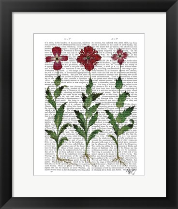 Framed Italian Carnation 1 Print