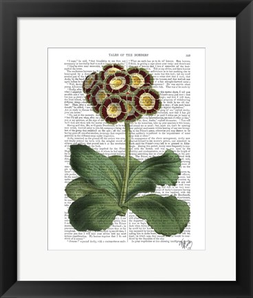 Framed Primula Auricula Red Print