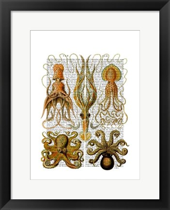 Framed Octopus and squid Print