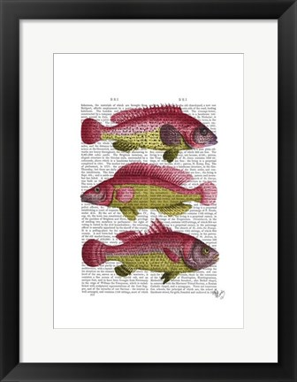 Framed Red and Yellow Fantasy Fish Trio Print