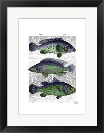 Framed Blue and Green Fish Trio Print