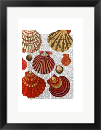 Framed Red Clam Shells Print