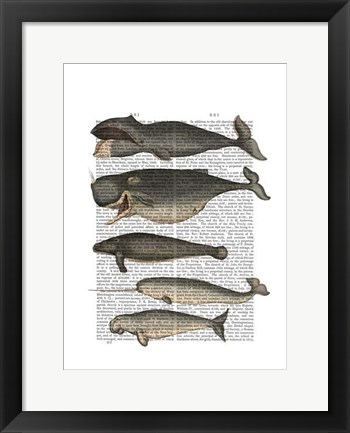 Framed Five Vintage Whales Print