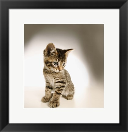 Framed Cute Kitty Print