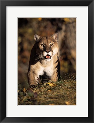 Framed On the Hunt Print