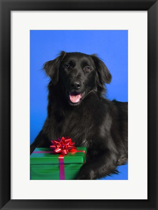 Framed Dog with Present Print