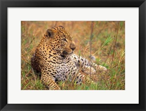 Framed Majestic Cat Print
