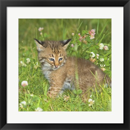 Framed Wild Cat Cub Print