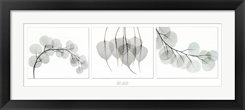 Framed Evergreen Triptych Print