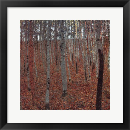 Framed Forrest Of Beech Trees Print