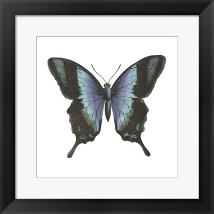 Framed Butterfly Botanical I Print