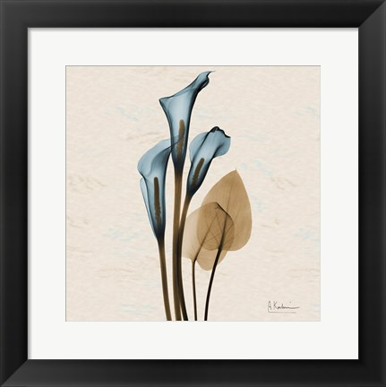 Framed Calla Lily Blue Brown H36 Print