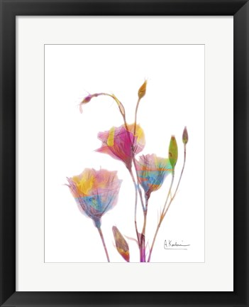 Framed Gentian B9 Watercolor Print
