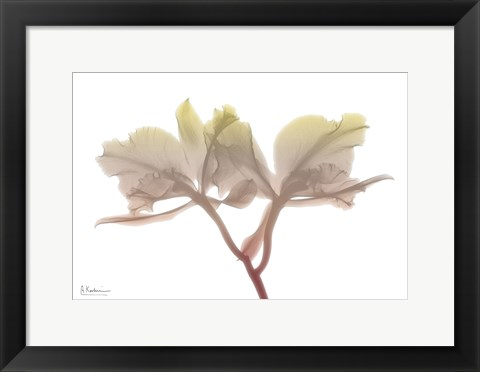 Framed Orchid Dawn Print
