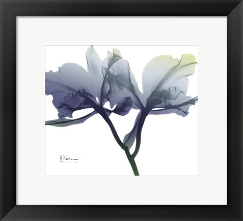 Framed Midnight Orchid 1 Print