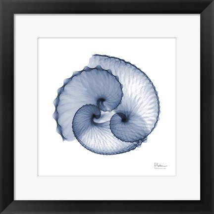 Framed Indigo Sea Shells Print