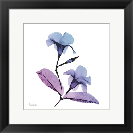 Framed Mandelilla Purple 2 Print